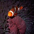 live tropical marine fish picture by lynn funkhouser